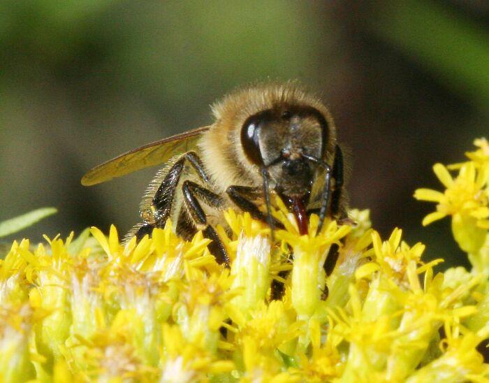 Bee on Fllower